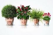 Домашние растения: правда и мифы