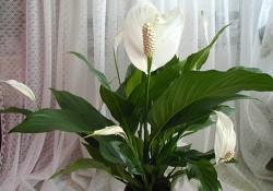 Цветы, вносящие дисбаланс в ваш дом, или как не навредить здоровью
