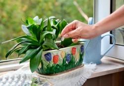 Как заставить растения дарить красоту дольше